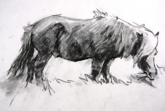 Charcoal sketch of model, done in 20min from life in paddock in Dulcot, Hobart, Tasmania.