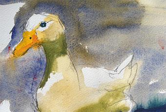Watercolour painting of a pale duck by Tasmanian plein air artist, Rick Crossland. Thumbnail version.