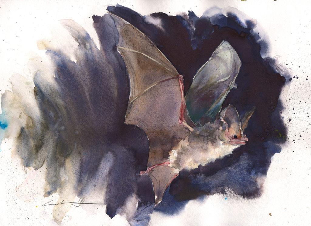 Painting of a bat in flight by Tasmanian artist, Rick Crossland